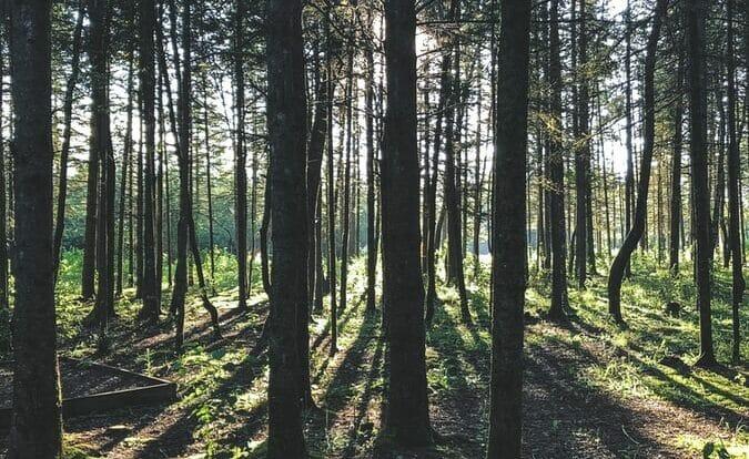 Leitura Espiritual - A Lenda das Três Árvores