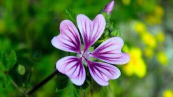 Leituras Espirituais - A Flor da Honestidade