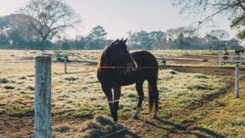 Leitura Espiritual - A Parábola do Cavalo
